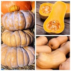 Butternuti squash - 3 köögiviljataimede sortide seemnete komplekt -  - seemned