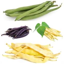 Đậu Pháp - bộ hạt của 4 giống cây rau -
