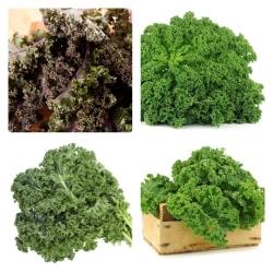 Kale - 4 köögiviljataimede sortide seemned -