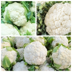 Cauliflower - set of seeds of 3 vegetable plant varieties
