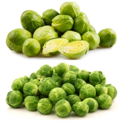 Brussels sprouts - Set 1 - seeds of 2 vegetable plants' species