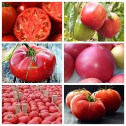 Raspberry tomato - set 1 - set of seeds of 6 varieties