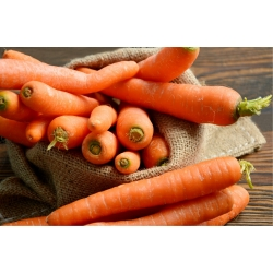 "Carrot ""Berlikumer 2"" - COATED SEEDS"