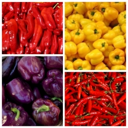 Extremely hot Variety Producing Round Fruit with Ornamental Value Seeds Pepper Koral