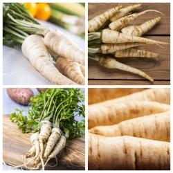 Rau mùi tây - hạt giống của 4 giống cây rau -