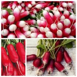 Củ cải dài vừa - bộ hạt của 3 giống cây rau -