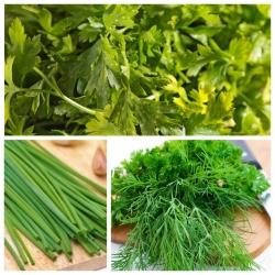 Thì là, rau mùi tây, hẹ - bộ hạt của 3 loài thực vật -
