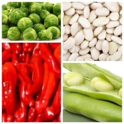 Metabolismi suurendavad köögiviljad - 4 köögiviljataimede liigi seemned -