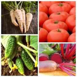 Köögiviljad, mis detoksifitseerivad keha - 4 köögiviljataimi seemnete kogum -  - seemned