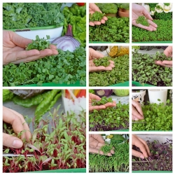 Microgreens - Vitamin bomb - health-supporting - 10-piece set with a growing container