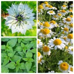 Thực vật làm dịu phản ứng dị ứng - bộ hạt của 3 loài thực vật -