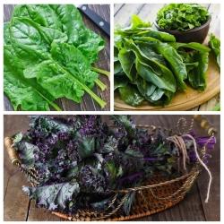 Koor (dokk), lehtkapsas, spinat - 3 köögiviljataimi seemnete kogum -  - seemned