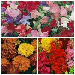Flower Mix - Foxtrot - SEED TAPE