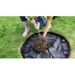 Lawn edging - Border - 4.8 m - black