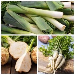 Rau mùi tây, tỏi tây, celeriac - bộ hạt của 3 loài thực vật -