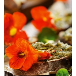 Edible Flowers - garden nasturtium Tom Thumb - colour variety mix; Indian cress, monks cress