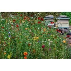 Melliferous bitkiler - kurutma noktaları için çok yıllık bitkilerin bir seçimi - 100 g -