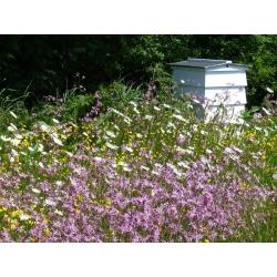 Plantas melíferas - Selección de plantas perennes para sitios húmedos - 100 g -