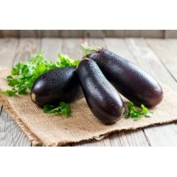 Aubergine 'Violetta Lunga 3'; eggplant