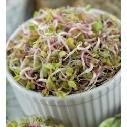 BIO Sprouting seeds - Daikon - certified organic seeds; winter radish
