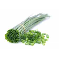 """Chives """"Civette"""" - early variety, professional seeds"""