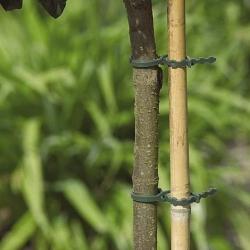 170-mm drevesna, grmovnica in druge rastlinske vezi - 30 kosov -