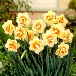 Dvojitý narcis Flower Parade - 5 ks -