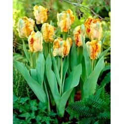 Тюльпан Parrot King - пакет из 5 штук - Tulipa Parrot King
