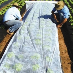 Spring fleece (agrotextile) - plant protection for healthy crops - 3.20 m x 20.00 m