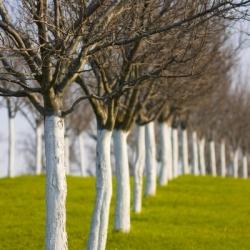 Kaļķis kokiem un krūmiem - 2 kg -