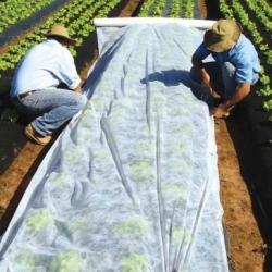 Bulu pegas (agrotextile) - perlindungan tanaman untuk tanaman sehat - 1,60 mx 5,00 m -