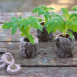 Expandable peat pellets 33 mm - 12 pieces