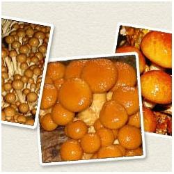 Nameko - ev yetiştiriciliği için hazır set - 3 kg - Pholiata nameko