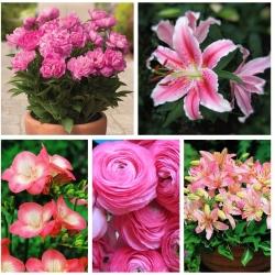 اختيار النباتات وعاء - الأنواع المزهرة الوردي - 5 أنواع -