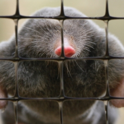 Mole repellent netting - molehill-free lawns - 1.00 x 100.00 m