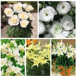 Valik potitaimi - valge ja kreemjas-valge-lilleline - 5 sorti -