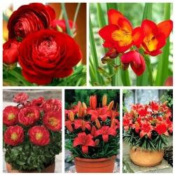Potttaimede valik - punase- lillelised liigid - 5 sorti -