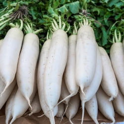 """Radish """"Astor"""" - white, elongated roots for direct consumption - 425 seeds"""