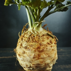 "Celleriac ""Dolvi"" - large roots with white, creamy, tender flesh; root cellery - 900 seeds"