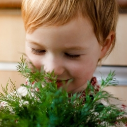 "Happy Garden - ""Dill  with skill""  - Seeds that children can grow! - 2430 seeds"