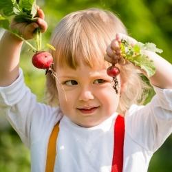 """Happy Garden - """"Round radishes"""" - Seeds that children can grow! - 400 seeds"""