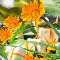 Söödavad lilled - pintsakarp - oranž; ruddles, ühine saialill, Scotch saialille - seemned