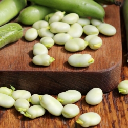 "Broad bean ""White Windsor"" - TREATED SEEDS"