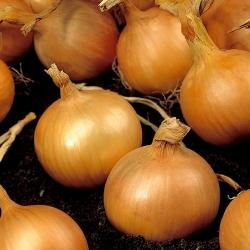 """Onion """"Kristine"""" - 750 seeds"""