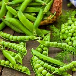 "Pea ""Wonder of Kelvedon"" - with wrinkled seeds"