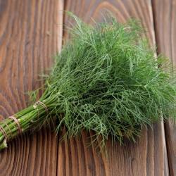 """Garden dill """"Superducat"""" - 2800 seeds"""