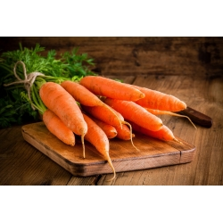 """Carrot """"Olympus"""" - COATED SEEDS"""