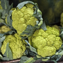 "Green cauliflower ""Verde di Macerata"" - 54 seeds"