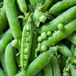 Pea Alderman seeds - Pisum sativum - 200 seeds