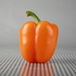 Poivron - Lamia - Capsicum annuum - Lamia - graines